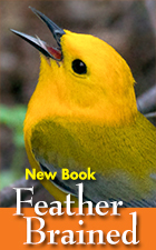 Bob's New Book! Feather Brained